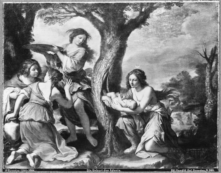 Die Geburt des Adonis aus dem Myrrhenbaum